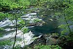 Spring trees along the Eno River, Eno River State Park, North Carolina
