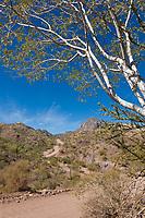 Desert country near Loreto on the Baja Peninsula, Mexico