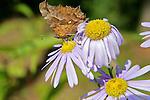 Moth on Flower, DMZ Tour