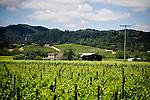 Surrounded by 35 acres of vineyards in the Dry Creek Valley, Unti Vineyards opened in 1997, in Healdsburg, Ca., on Saturday, June 6, 2009.