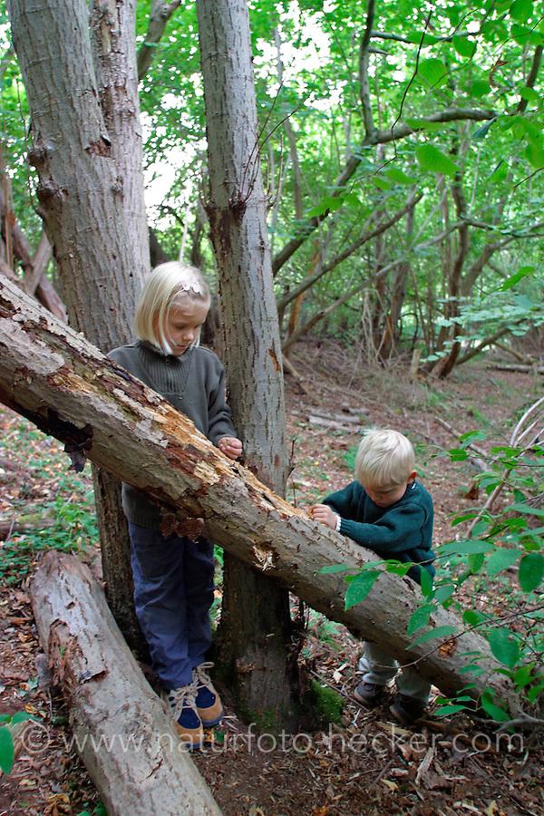 Mädchen und Junge, Kinder entdecken den Wald und suchen unter Rinde und in Totholz nach Tierchen