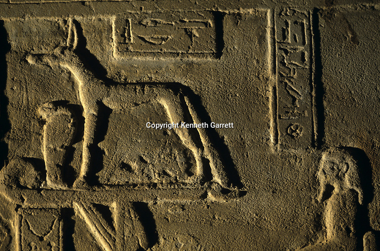 Detail of relief showing jackel god Anubis found in Ptolemaic temple of Amun at Hibis the Darb el-Arbaein, trade routeEgypt; Archaeologist; Salima Ikram; Kharga Oasis;Ancient Cultures; mm7195; Desert; Oasis