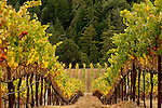 Goldeneye vineyards, Anderson VAlley, California