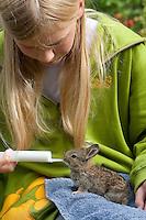 Wildkaninchen, Wild-Kaninchen, Kaninchen, verwaistes Jungtier wird in menschlicher Obhut großgezogen, Mädchen, Kind füttert Tierkind aus einer Spritze mit Spezial-Aufzuchtsmilch, Tierbaby, Tierbabies, Oryctolagus cuniculus, Old World rabbit