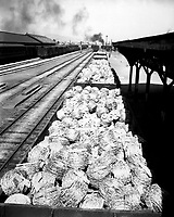 Railroad cars loaded with barbed wire at Taegu RTO (Railway Transportation Office), Korea.  July 24, 1950. Sgt. Riley.  (Army)<br /> NARA FILE #:  111-SC-344307<br /> WAR &amp; CONFLICT BOOK #:  1404