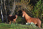 Horses graze in Breathitt County, KY Photo by Amy Gaskin