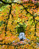 Demon Tile cap of the Tea House (Kashin-Tei) called the Flower Heart House is framed by the Fall leaves of the Japanese Maple in the Portland Japanese Garden.  These tiles protect the structures they guard.