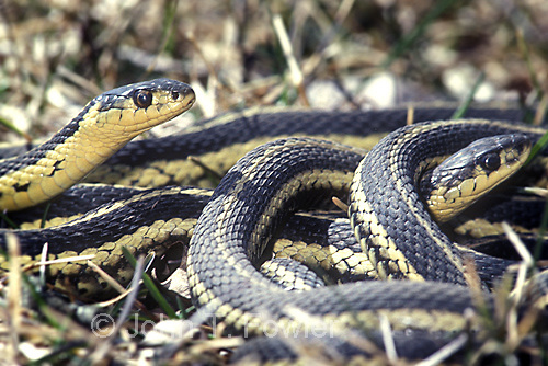 how to get a snake to stop constricting