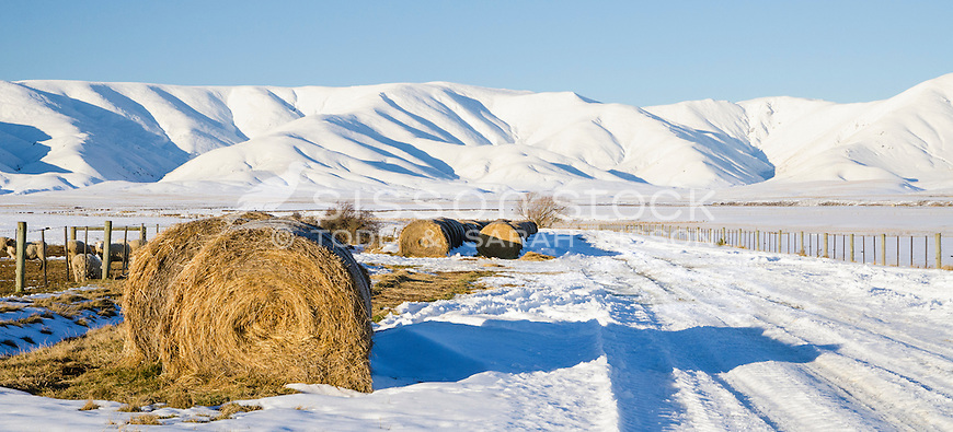 Road haybales on snow covered ground Wedderburn in the Maniototo, Central Otago, South Island, New Zealand - stock photo, canvas, fine art print