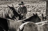Fine Art Prints of Cowboys and Cowgirls working on western ranches by western photographer Jess Lee  Black and white and sepia
