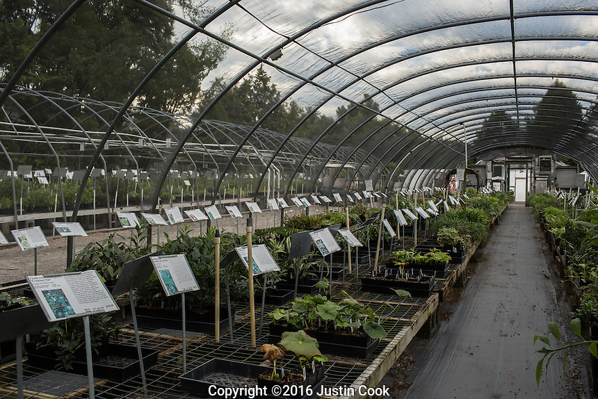 Scenes at Juniper Level Botanical Garden and Plant Delights Nursery in Raleigh, NC on Monday, August 29, 2016. (Justin Cook)