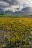 Grassy meadow in Katmai National Park, Alaska Peninsula, southwest Alaska. Aleutian mountain range covered by clouds in the distance
