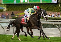 ARCADIA, CA  FEBRUARY 4: #11 Isotherm, ridden by Flavien Prat, wins the San Marcos Stakes (Grade ll) on February 4, 2017, at Santa Anita Park in Arcadia, CA.  (Photo by Casey Phillips/Eclipse Sportswire/Getty Images)