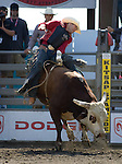 Jess Bail, from Camp Crook, S.D. tries to hang onto Dennis during the Xtreme Bull Riding Competition at the Kitsap County Fair and Stampede  held Aug. 26 to Aug. 30, 2009 in Silverdale, WA. Jim Bryant Photo. All Rights Reserved. © 2009
