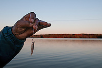 Fisherman holds a hook baited with a minnow as he fishes along the shoreline of a lake as the sun sets in the fall