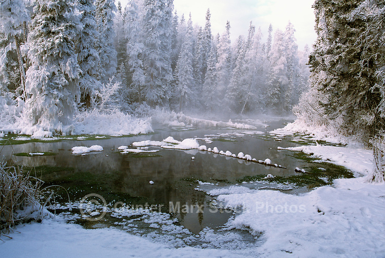 Winter Setting of Frosted Trees in Warm Marsh, in Liard River Hot Springs Provincial Park, Northern British Columbia, Canada