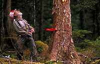 A logger in a hard hat clooks up at a tree he is about to cut. Alaska.