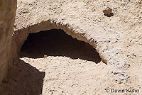 0609-1012  Entrance for Desert Tortoise Burrow (Mojave Desert), Gopherus agassizii  © David Kuhn/Dwight Kuhn Photography