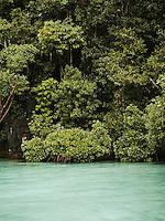 Mangrove at a hidden lagoon at Farondi, Misool, Raja Ampat, West Papua, Indonesia