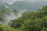 A virgin forest in Mt. Rano high up in the clouds (with Imbu meaning mist or fog) at 380 meters above sea level in KolombangaraI sland.  Kolombangara, roughly meaning &ldquo;Water Lord&rdquo;, is a crater mountain that peaks at 1,770 meters with 80 rivers and streams running through it.
