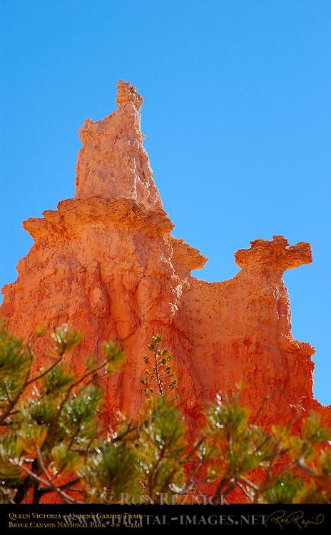 Queen Victoria Hoodoo, Queen's Garden Trail, Bryce Canyon National Park, Utah