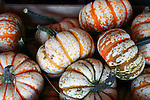 Mini colorful pumpkins