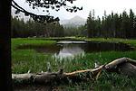 Pond near Tioga Pass