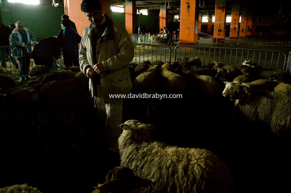 A man looks for the sheep he has purchased at a temporary slaughterhouse set up in an hanger in Pantin, outside Paris, France, during the ritual sheep slaughter held for the Muslim celebration of Aid-el-Kebir, 1 February 2004. Photo Credit: David Brabyn.