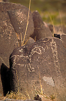 The Three Rivers Petroglyphs are outstanding examples of prehistoric Jornada Mogollon rock art. The basaltic ridge rising above the Three Rivers valley contains over 21,000 petroglyphs including, masks, sunbursts, wildlife, handprints, and geometric desig