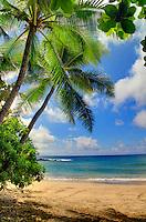 Palm tree at Hamoa Beach in Hana, Maui, Hawaii.