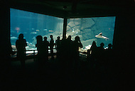 December 11, 1984 - Monterey Bay, California. Visitors watch marine life at viewing room in the Monterey Bay Aquarium. The Monterey Bay Aquarium, located on Cannery Row of the Pacific Ocean in Monterey California, was founded in 1984 and holds thousands of plants and animals. The annual attendance of the aquarium is 1.8 million visitors.