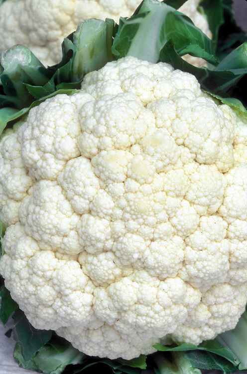 Cauliflower 'Virgin' white head vegetable showing florets detail closeup