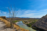 Wonderful landscape of this Ocotillo growing on the edge of Santa Elena Canyon as the Rio Grande river flows below.