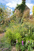 Ornamental grass, Euphorbia, Penstemon, dianthus, against house on sunny day with blue skies in cottage style garden