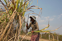 """Cambodia - Kampong Speu Province - Louv Veoun, 39, working in the sugarcane plantation. """"I don't want money, I want my old land back. It is the land of my ancestors"""". Louv Veoun, 39 and mother of 8, was living in a small cottage on her rice field in Kork until March 2010, when she was dispossesed of her two hectares of land and compensated with 25 USD. She was forced to abandon her house and settle in a piece of land belonging to some of her relatives, close to the plantation. Today, she lives in utter poverty together with her family."""