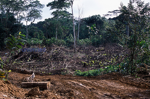 The trails built for forestry machines to cut, harvest, and transport tropical rainforest trees are also used by villagers to gain access to deforested areas and to practice slash-and-burn agriculture. Kayate, Oriental Province, Democratic Republic of Congo.