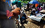 A chicken awaits a buyer in a weekly market in Despagne, an isolated village in southern Haiti where the Lutheran World Federation has been working with residents to improve their quality of life.