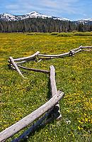 Perazzo Meadows in Spring