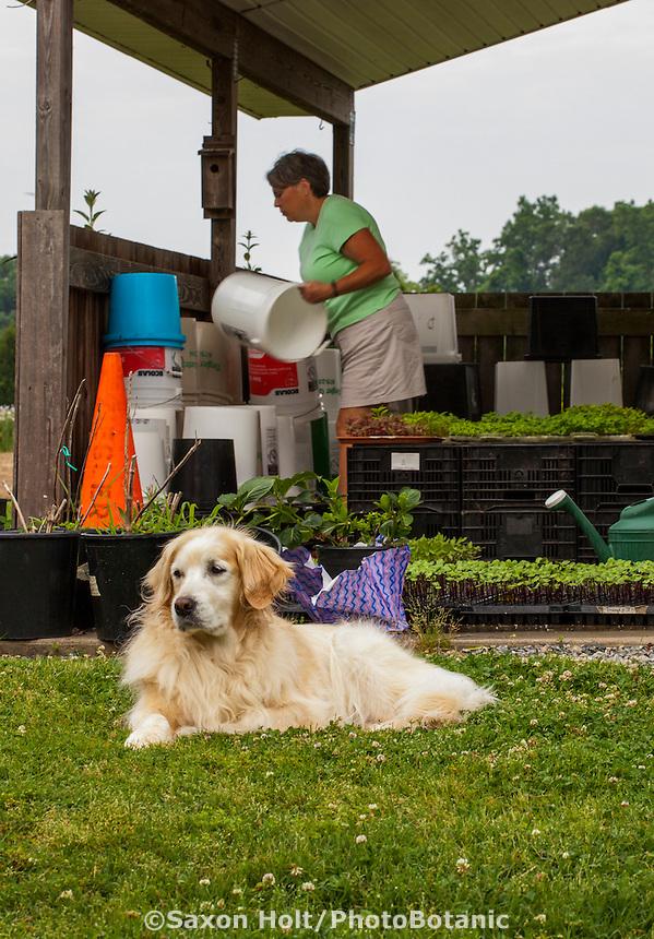 Lisa Ziegler watering seedlings with Babs the watchdog at Gardeners Workshop farm