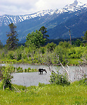 Moose<br />