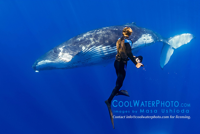 photographer and humpback whale, Megaptera novaeangliae, Hawaii, Pacific Ocean, MR, Model Released