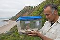 Professor Karim Vahed with captive bred Scaly Crickets (Pseudomogoplistes vicentae) ready for release onto a shingle beach site on the Devon coast. UK, June.