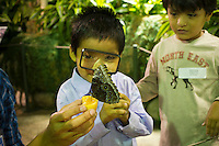 """Children from the Goddard Riverside Head Start Program observe a Blue Morpho butterfly (morpho peleides) from Costa Rico in """"The Butterfly Conservatory:  Tropical Butterflies Alive in Winter"""" at the American Museum of Natural History in New York on Thursday, October 6, 2011.  500 butterflies hover above the visitors in the 1200 square foot  vivarium where children and adults can observe and play amongst the flying beauties.  (© Frances M. Roberts)"""