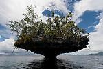 Karst limestone islet of Raja Ampat