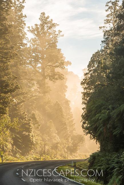 Road through rainforest in morning fog after sunrise, West Coast, Westland Tai Poutini National Park, UNESCO World Heritage Area, South Westland, New Zealand, NZ