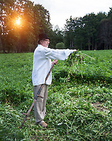 Farmer cleaning scythe in Estonia. Meadow, hay, sun flare.