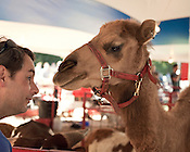 October 15, 2011. Raleigh, NC..In the petting zoo at the 2011 North Carolina State Fair.