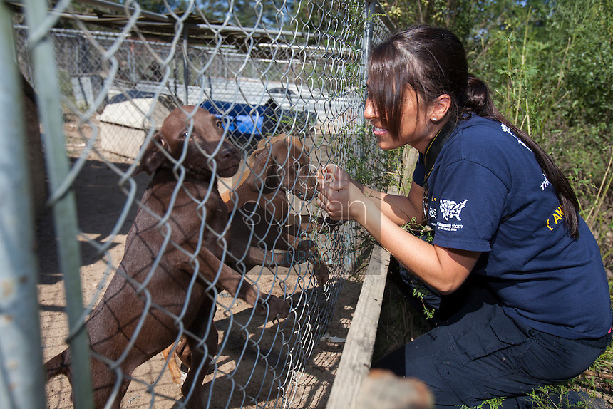 Ashley Mauceri, of the HSUS Animal Rescue Team, plays with dogs during a raid on a puppy mill in Johnston, SC on Tuesday, Sept. 11, 2012. HSUS workers found over 200 dogs, nine horses and 30-40 fowl.