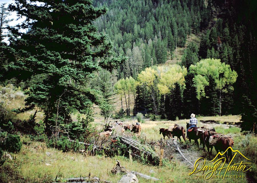 Cowboys, pack string, Bridger Teton National Forest, Jackson Hole, Wyoming