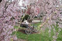 Spring blooms in Lee park.